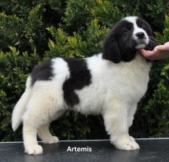 F1-Artemis-2