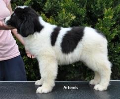 F1-Artemis-3