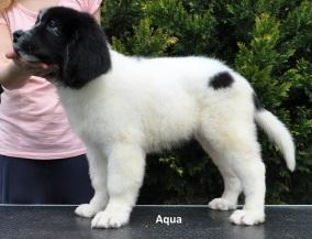 F2-Aqua-1