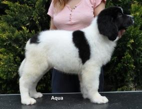 F2-Aqua-2