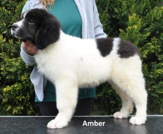 F3-Amber-1