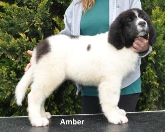 F3-Amber-2