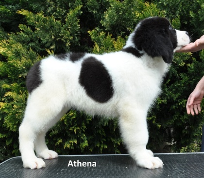 F4-Athena-4