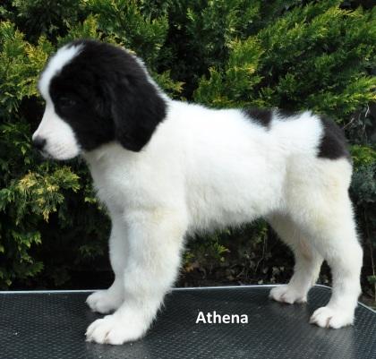 F4-Athena-7
