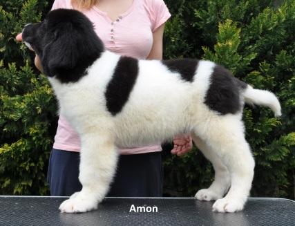 M2-Amon-3