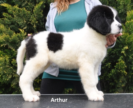 M4-Arthur-1
